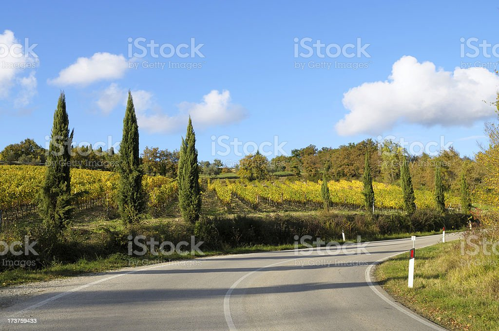 Winding Country Road Cypress Tree and Vineyard in Autumn royalty-free stock photo