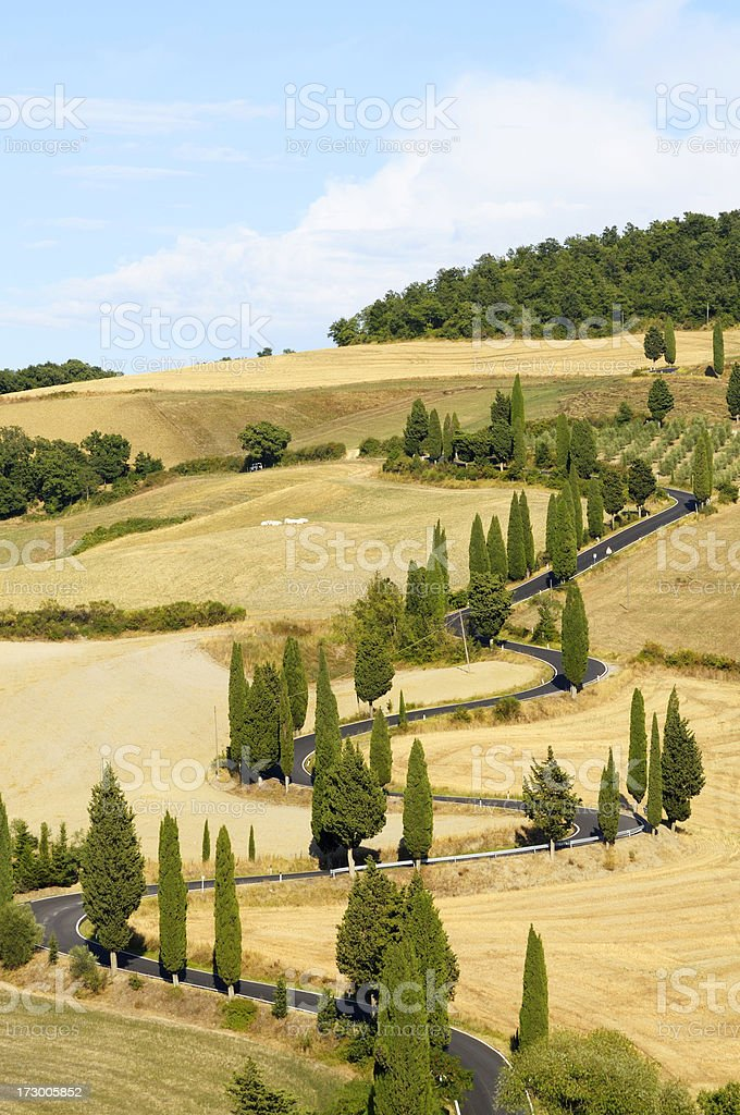 Winding Country Road Cypress Tree royalty-free stock photo