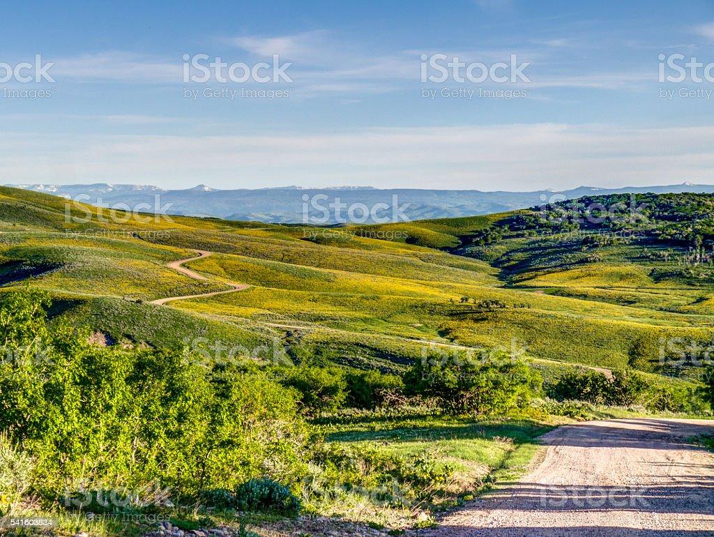 Winding Country Road, Fields of Arrowleaf Balsamroot stock photo