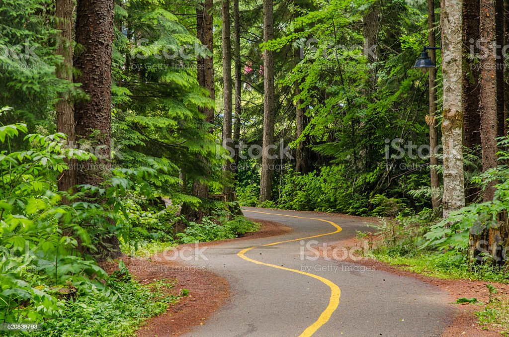 Winding Cycle Path through a Wood stock photo