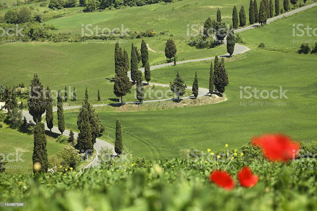 Winding Cypress lined road in Monticchiello, Val d'Orcia Tuscany Italy royalty-free stock photo