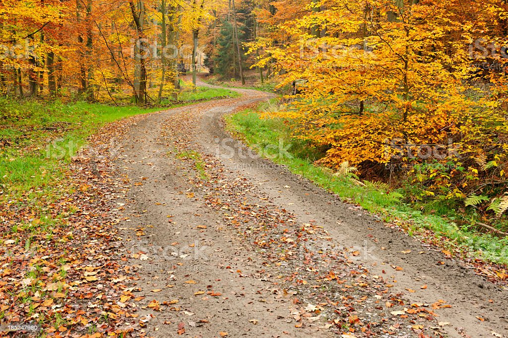 Winding Dirt Road through Mixed Deciduous Tree Forest in Autumn stock photo