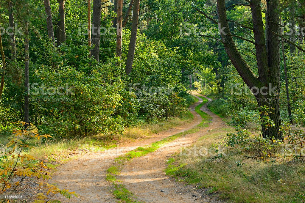Winding Dirt Road through Mixed Tree Forest royalty-free stock photo