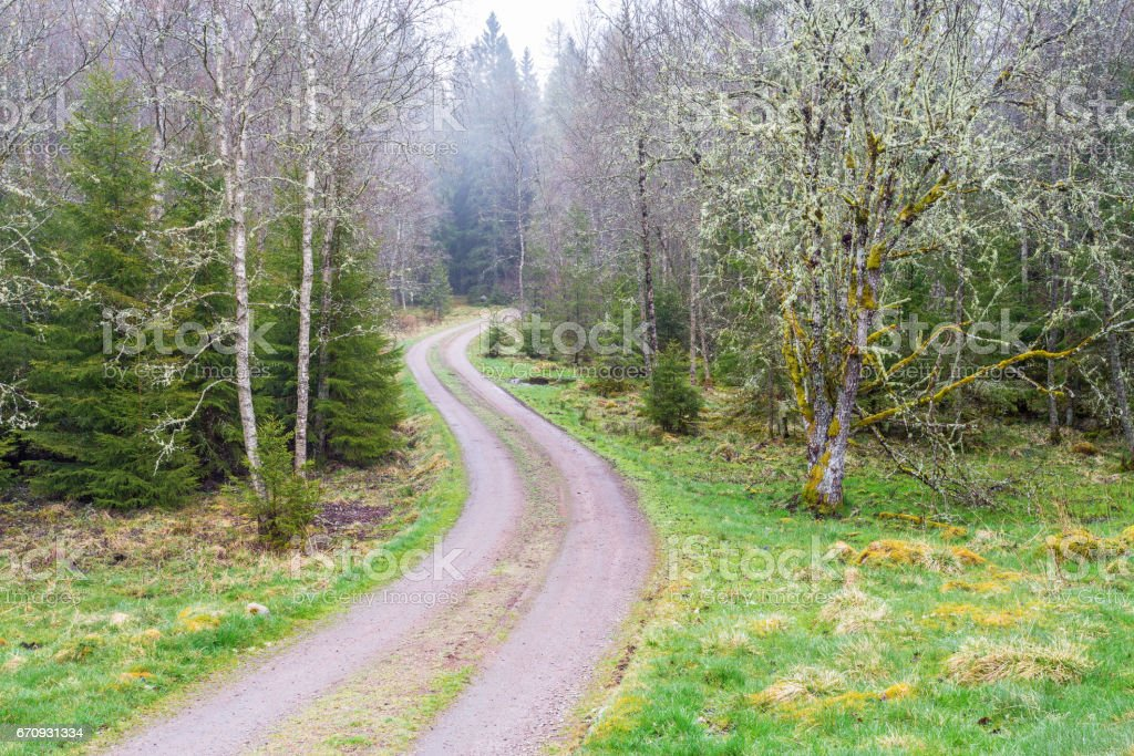 Winding dirt road through the woods stock photo