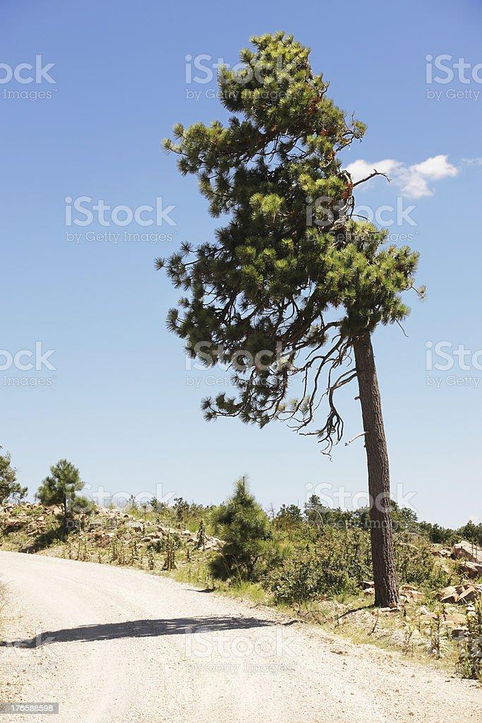 Winding Dirt Road Wilderness Roadside Tree royalty-free stock photo