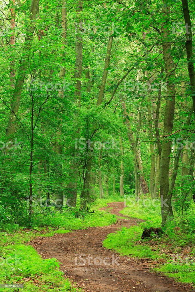 Winding Forest Path stock photo