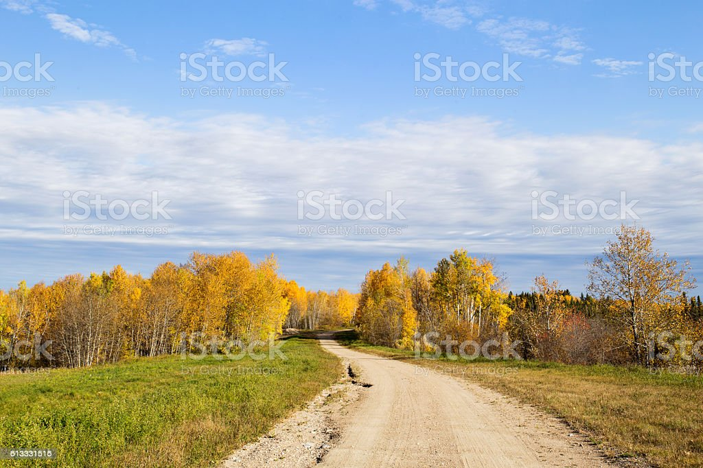 Winding gravel road through autumn forest stock photo