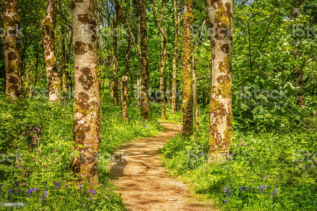 Winding path in the forest stock photo