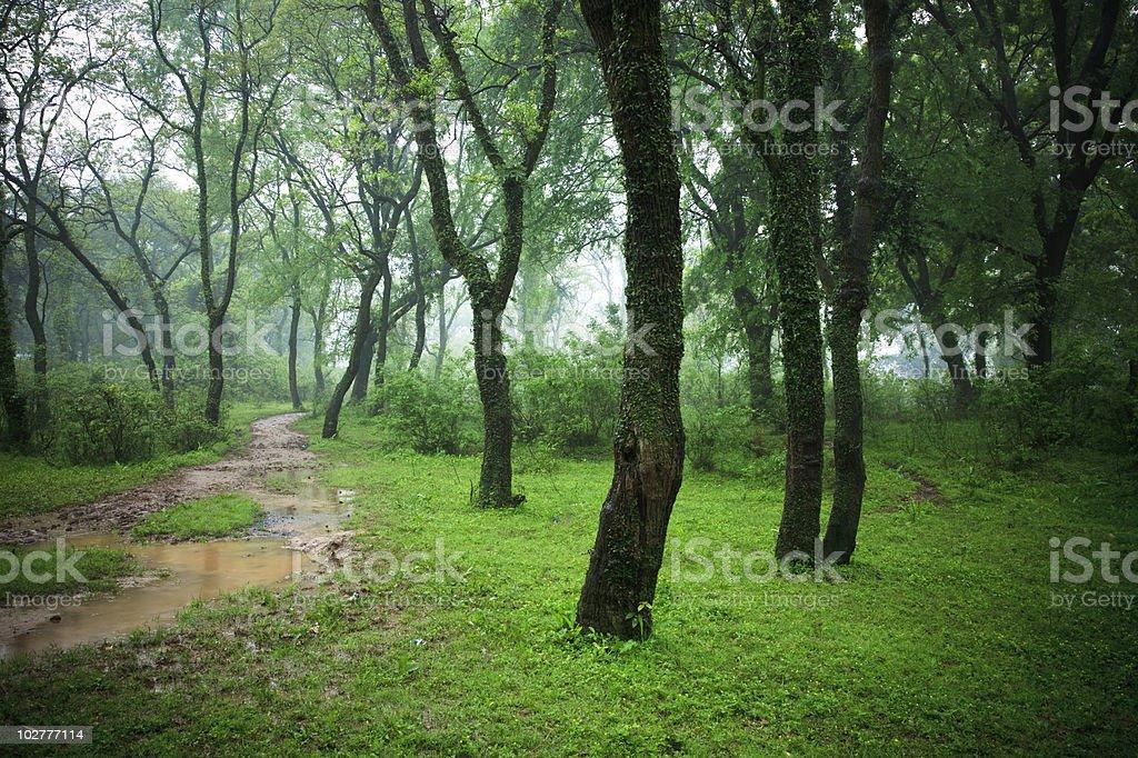 winding path through lush foliage stock photo