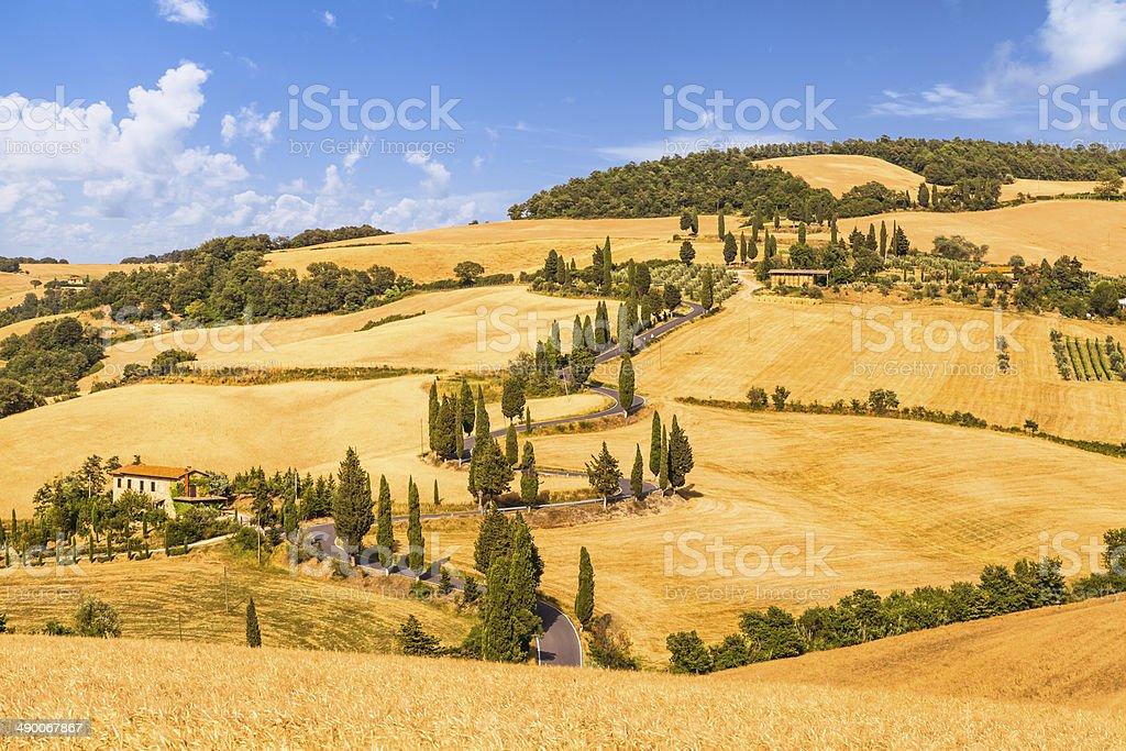 Winding road across golden fields of corn stock photo