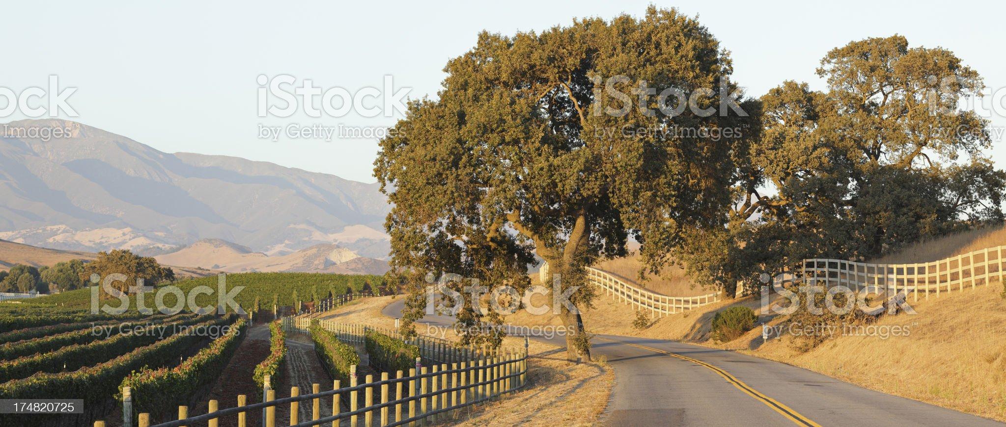 Winding Road and Vineyard royalty-free stock photo