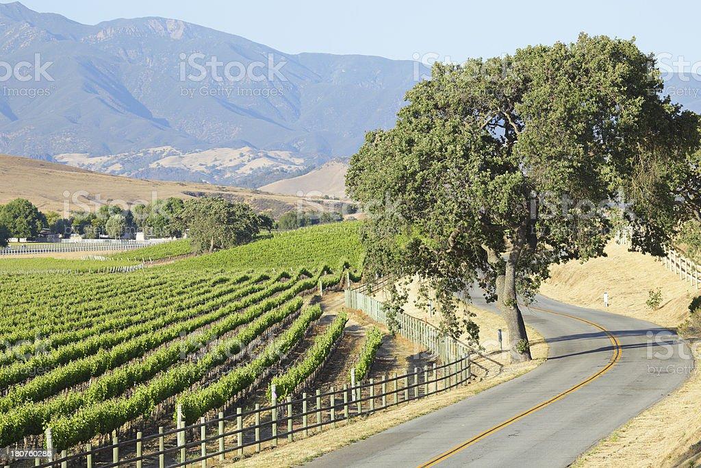 Winding road and vineyard stock photo