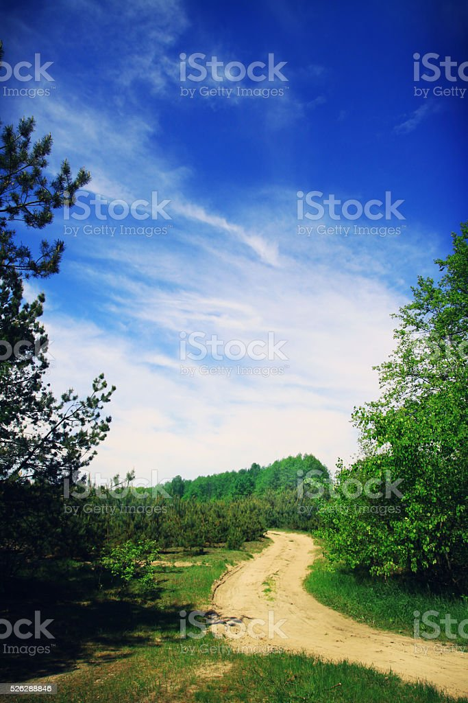 Winding road in a beautiful forest stock photo