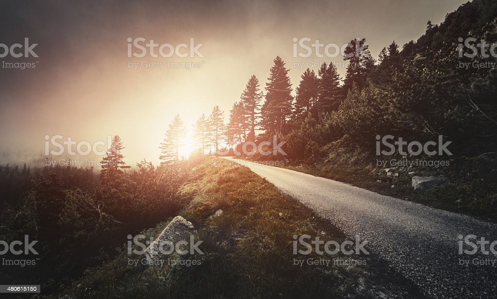 Winding road in a misty forest stock photo
