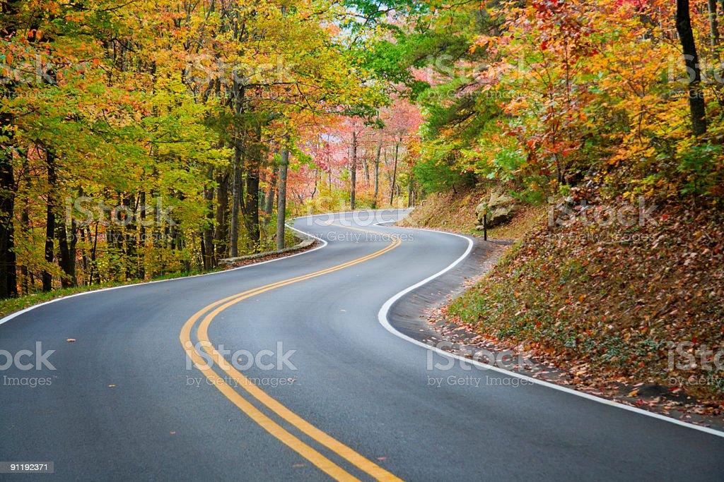 Winding road in autumn leaved forest stock photo