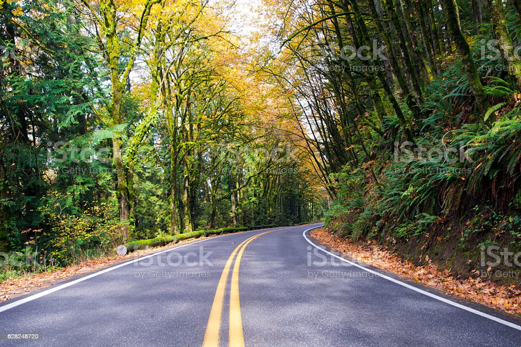 Winding road in quiet autumn yellowing forest stock photo