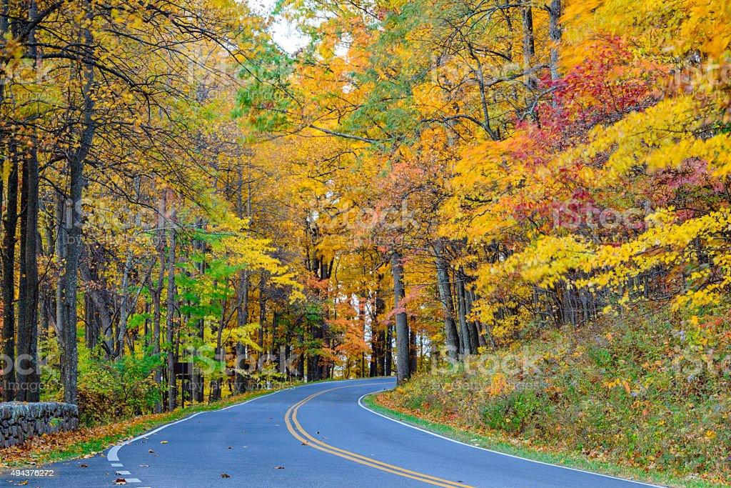 XXXL: Winding road through autumn forest stock photo
