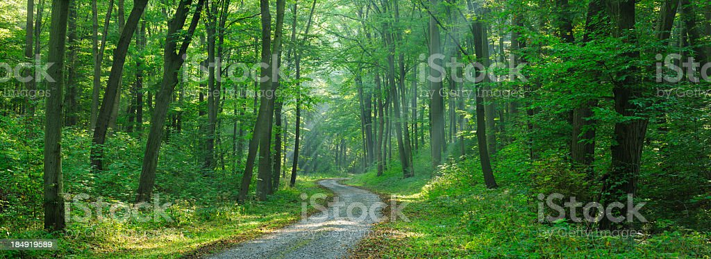 Winding Road through Mixed Deciduous Tree Forest with Sunrays royalty-free stock photo