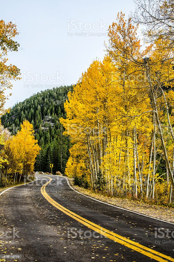 Winding Road Through the Aspens in the Colorado Rocky Mountains stock photo