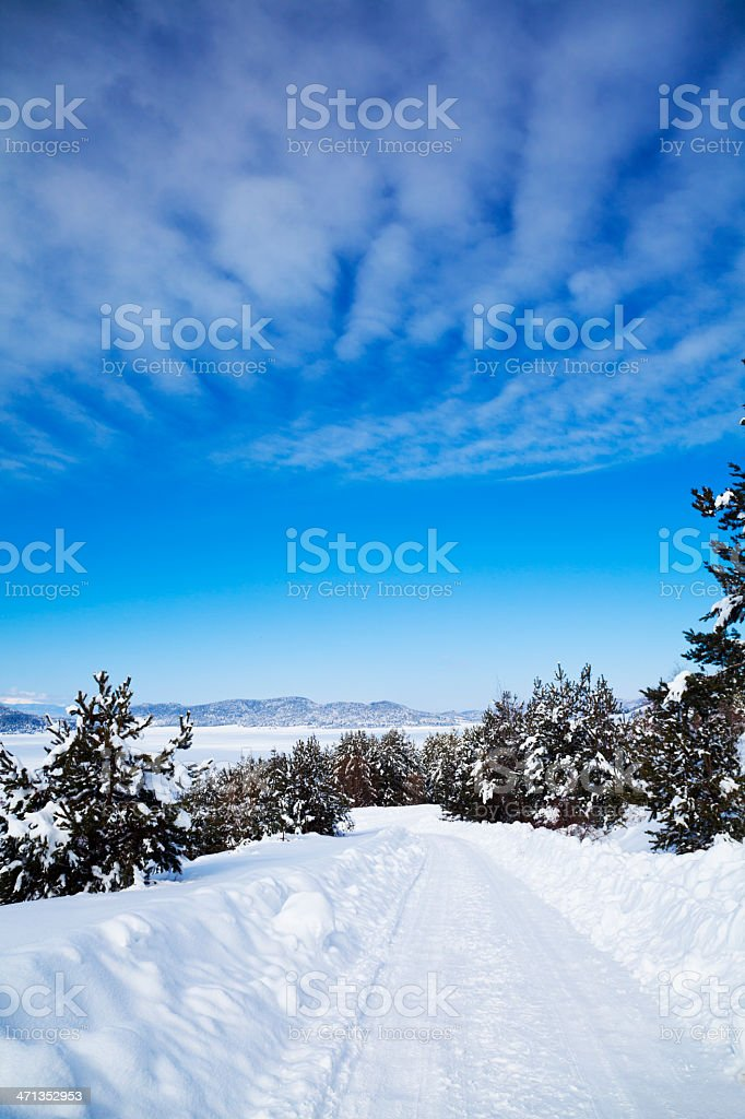 Winding Road through Winter Forest royalty-free stock photo