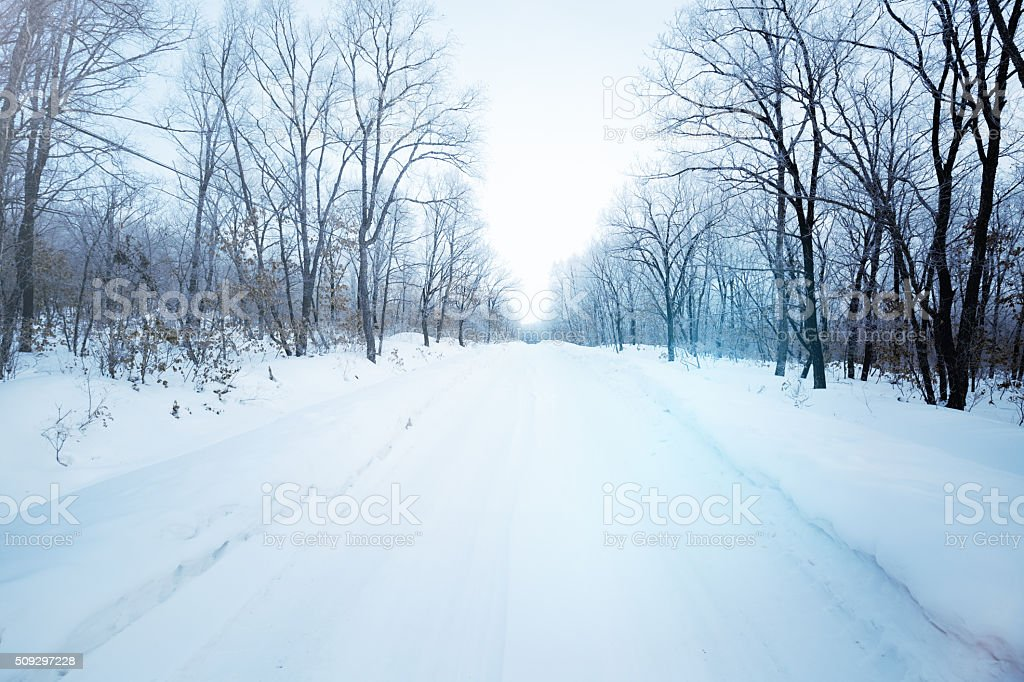 Winding Road through Winter Forest stock photo