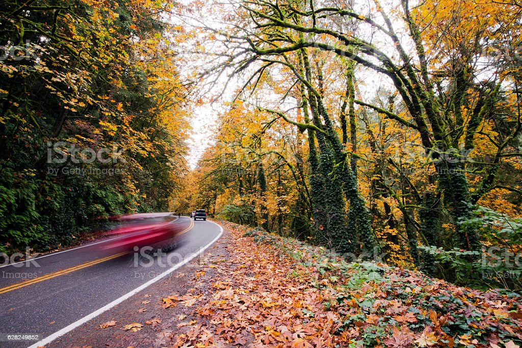 Winding road with cars in autumn forest stock photo