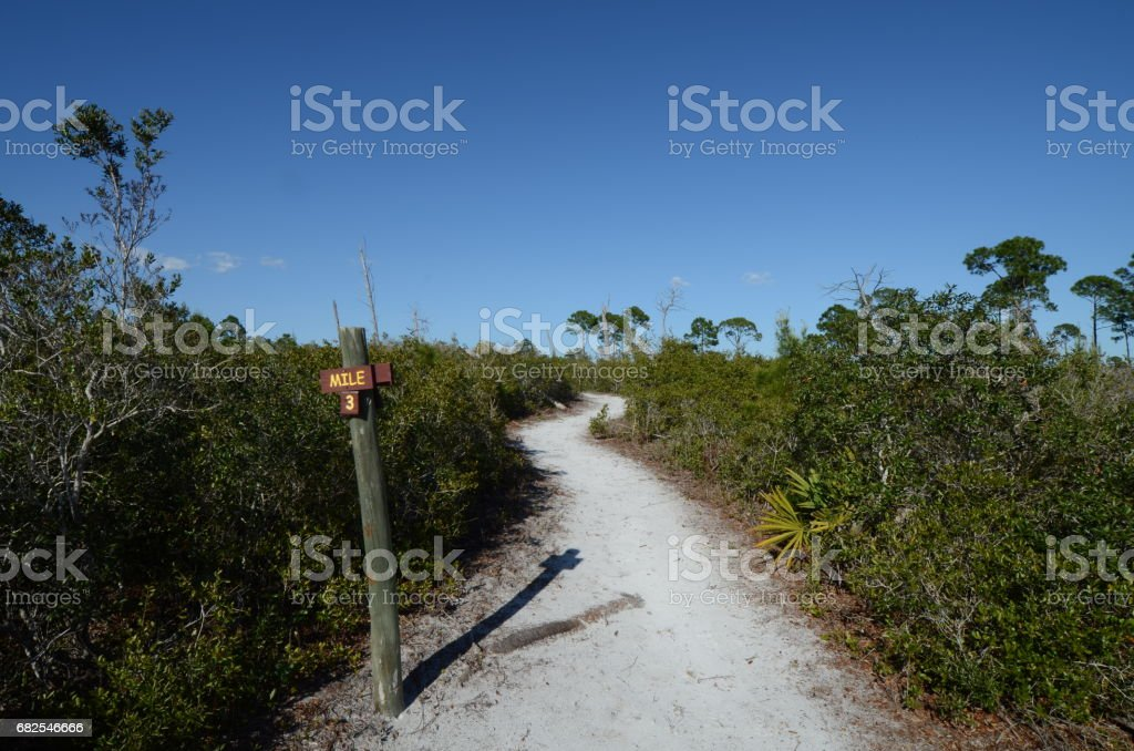 Winding sandy trail with milemarker in sparse pine forest stock photo
