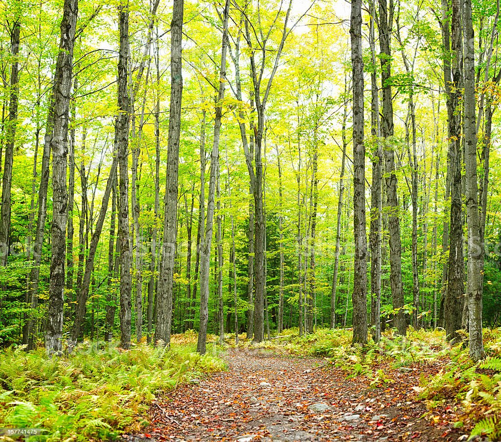 Winding trail Autumn forest nature background royalty-free stock photo
