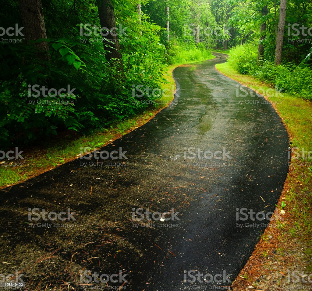 A winding trail in a forest after a rainy day  royalty-free stock photo