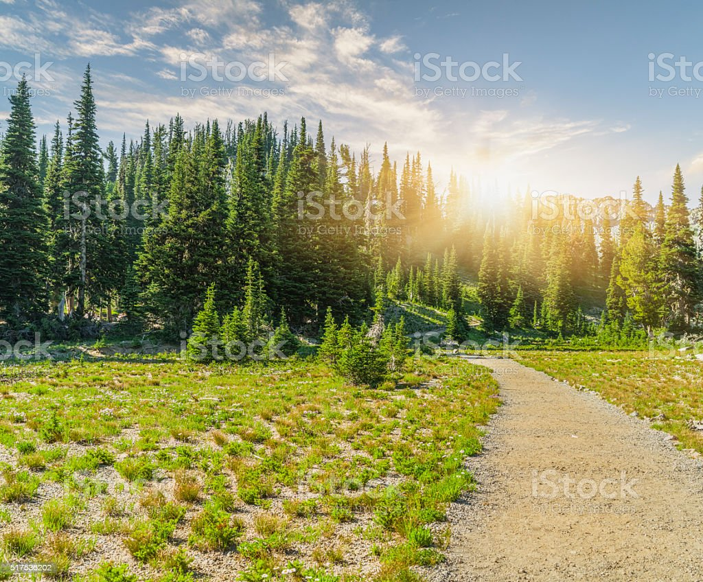 winding trail to MT.Rainier stock photo