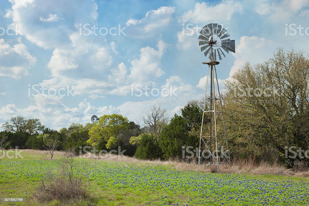 Windmill and bluebonnets in the Texas Hill Country stock photo