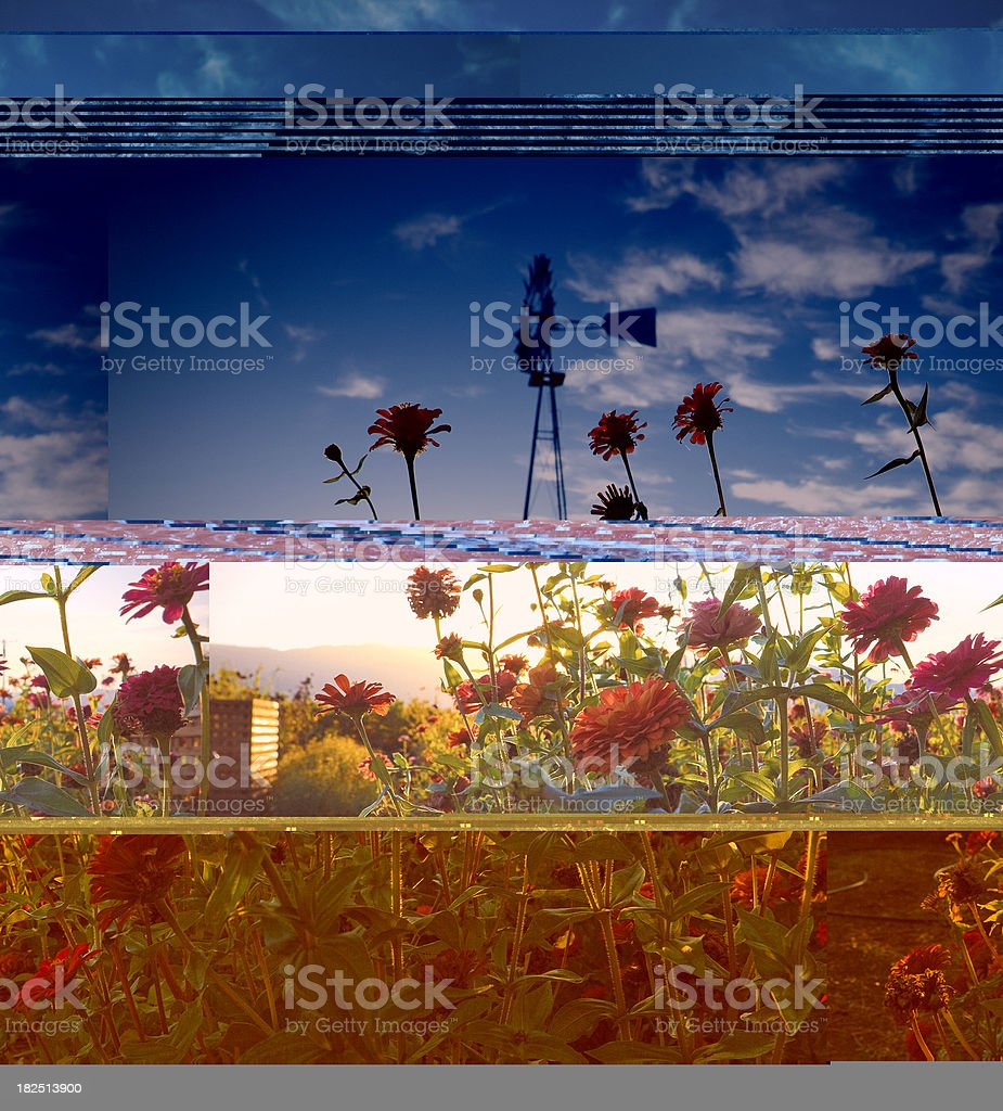windmill and flowers in napa valley stock photo