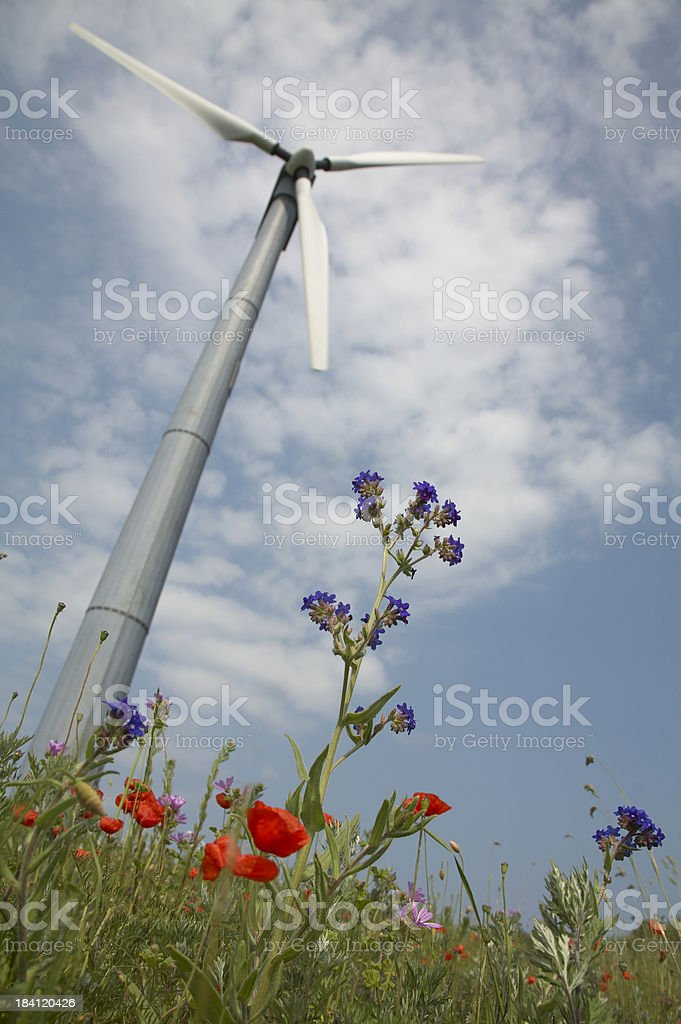 Windmill and flowers stock photo
