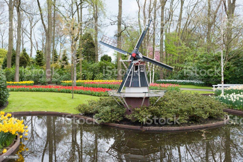windmill and tulips in dutch Keukenhof stock photo