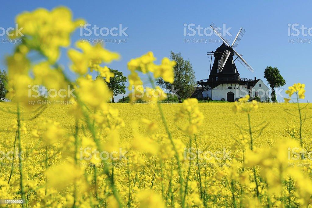 WIndmill in a field in Kronetorp, Skane, Sweden stock photo