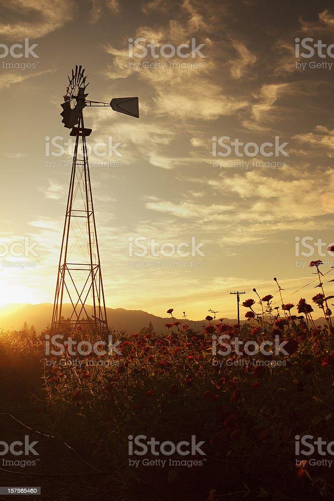 windmill in napa valley, sunset scene stock photo