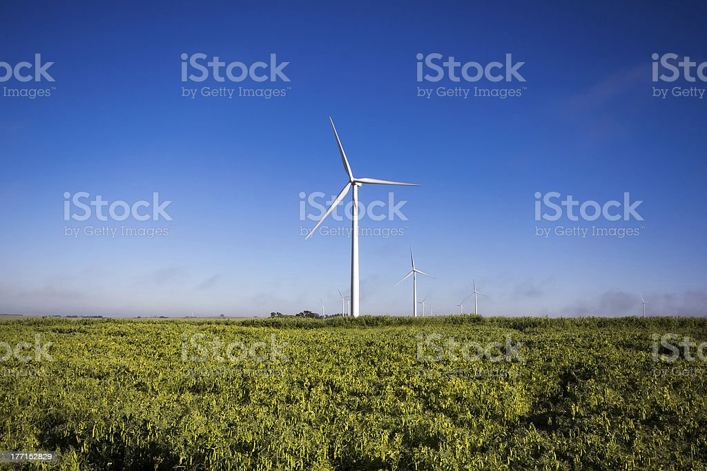 Windmill in Pea Crop royalty-free stock photo