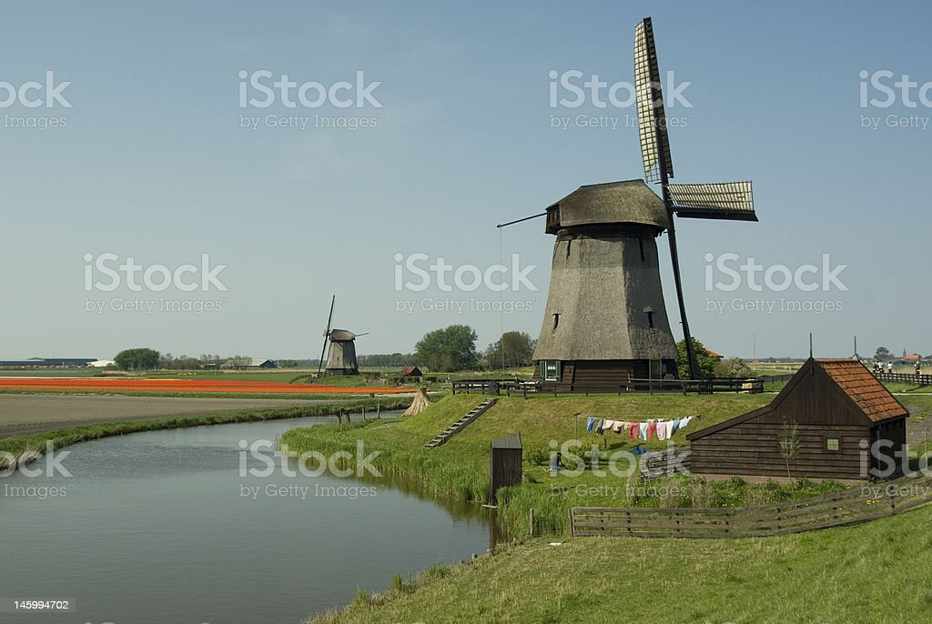 Windmill with tulips royalty-free stock photo
