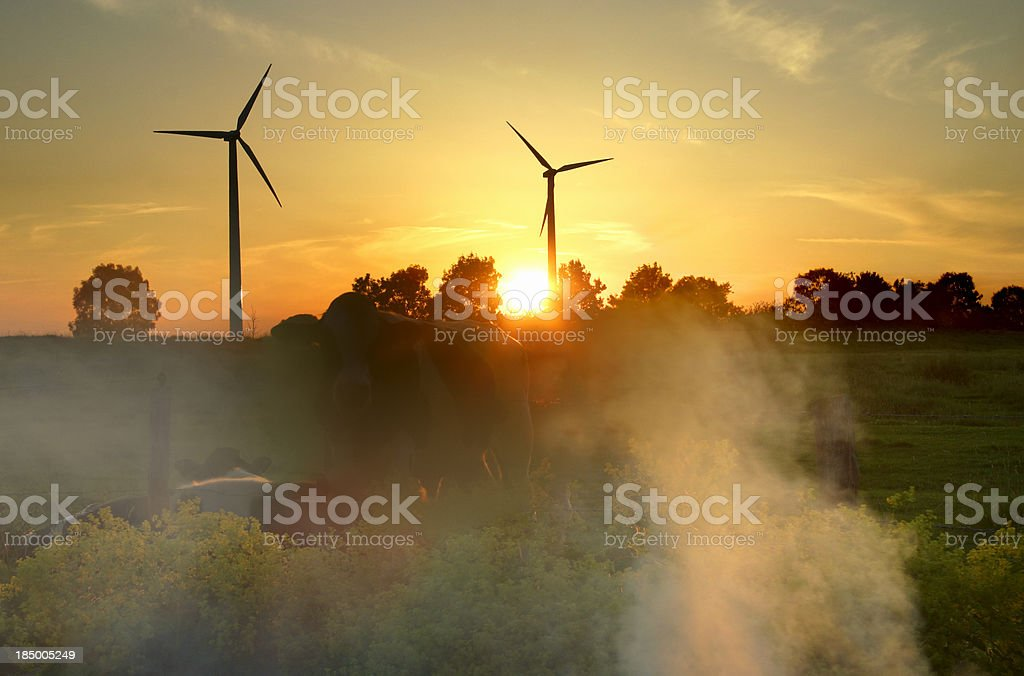 Windmills and cows royalty-free stock photo