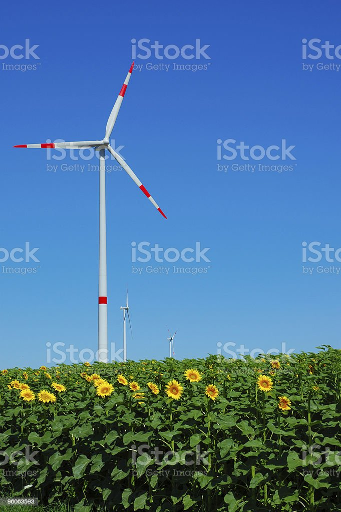 Windmills in a German sunflower field royalty-free stock photo
