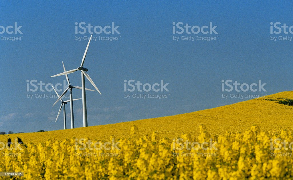 Windmills on the Yellow Fields royalty-free stock photo