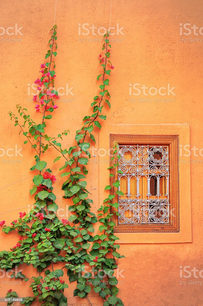 Window and Ivy in Marrakech, Morocco stock photo