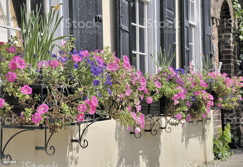 Window Boxes, Charleston, South Carolina royalty-free stock photo