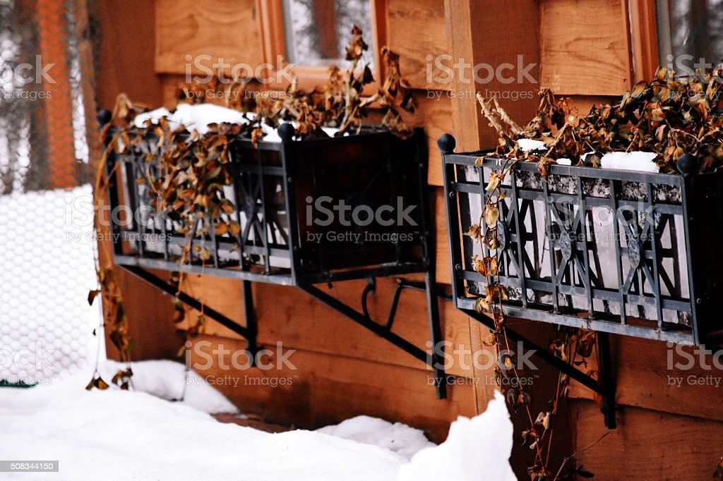 Window Boxes royalty-free stock photo
