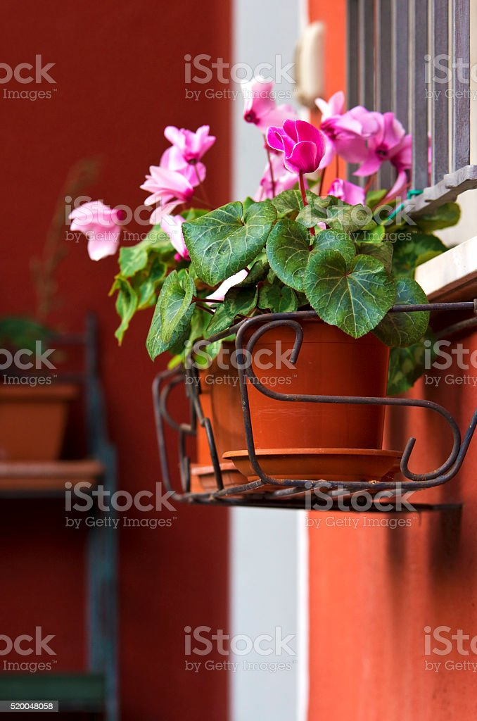 Window flower pot royalty-free stock photo