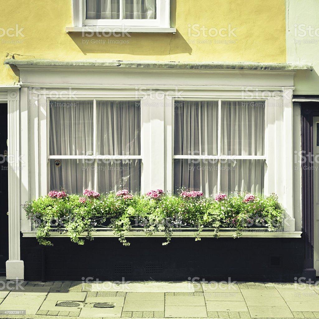 Window garden stock photo