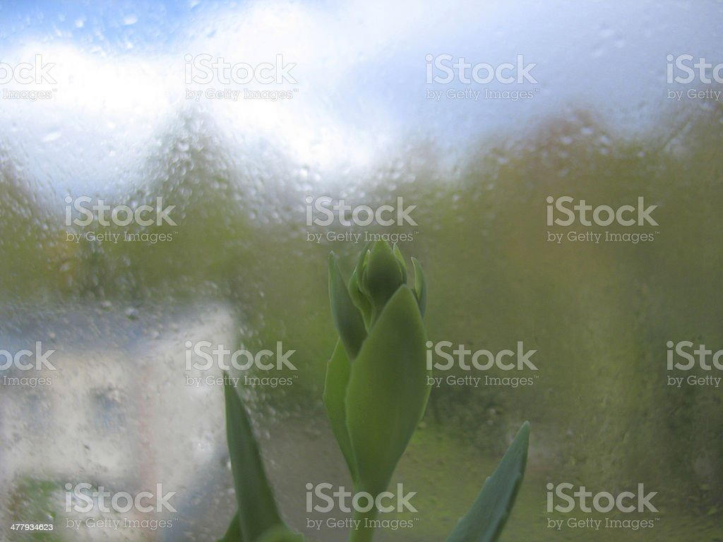 window glass, plant and rain drops royalty-free stock photo