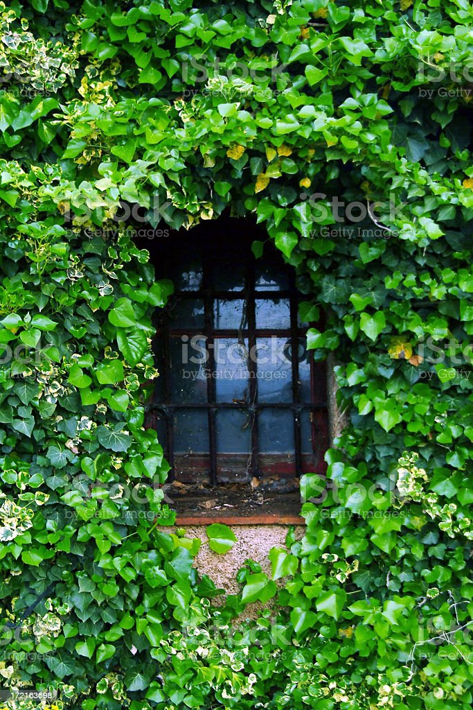 window in ivy royalty-free stock photo