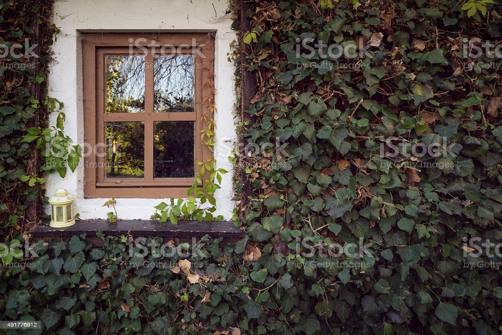 window ivy stock photo