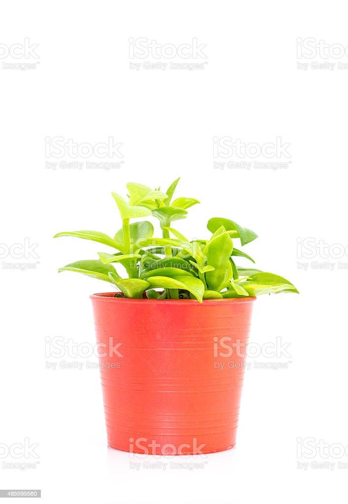 Window plant stock photo